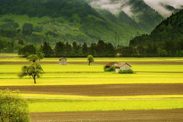 What is the Difference Between a Ranch and a Farm?