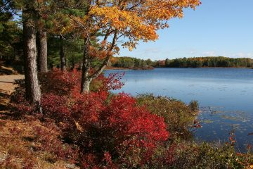 Why is land cheap in Maine?